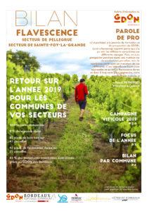 Bilan Flavescence 2019 : secteurs de Pellegrue et de Sainte-Foy-La-Grande