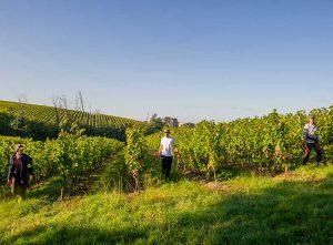 40 saisonniers sur le vignoble bordelais