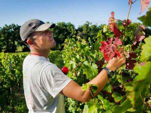 9 encadrants d'équipe sur le vignoble bordelais